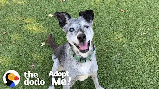 Watch This 19-Year-Old Puppy Pick His Very Own Toy At The Pet Store   The Dodo Adopt Me!