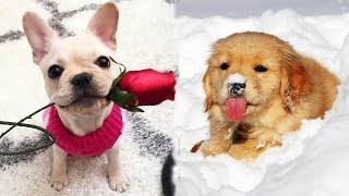 ♥Cute Puppies Doing Funny Things 2019♥ #4  Cutest Dogs