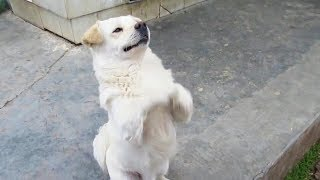 Funny Dogs 😂 Try NOT To Laugh Challenge [Funny Pets]