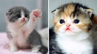 Cute Cat Doing Funny Things #6 🐱 Funny Cats Videos 2019 | Funny Cute Animals