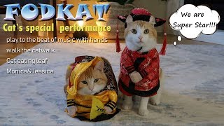 Vlog 10 Cute cats walk the catwalk/Cat play to the beat of the music with hands 2019