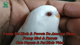 Funny Pet Birds & Parrots Do Amazing Things – Funny Bird & Parrots – Cute Parrots & Pet Birds Video