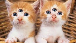 Funny Cats and Kittens Meowing -2