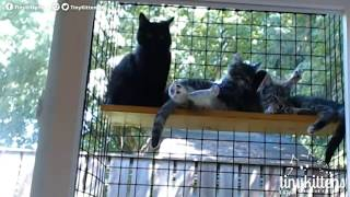 Tiny Kittens New catio view of fire rescue kittens 7 25 2017