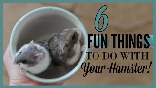 6 fun things to do w/ your hamster!
