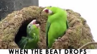 When The Beat Drops (Bird & Chick)  – 30 Seconds