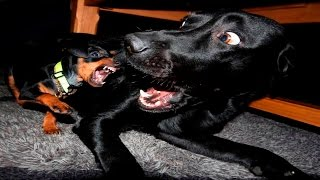 Funny Dog Videos 2016 – Funny Dogs Compilation January 2016 – Funny Dogs 2016