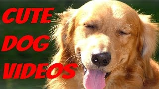 Cute Dogs – Cute Dog Videos compilation 2016 || NEW HD