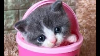 💗Aww – Funny and Cute Dog and Cat Compilation 2019💗 #25 – CuteVN