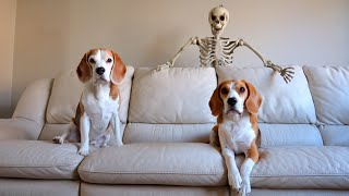 Scary Skeleton Vs Dogs : Funny Halloween Prank