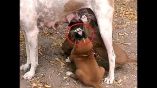 Try Not To Laugh,Ultimate Funny Dog's Babies & Birds.Video Compilation ,22 Funy And Informativ Scens