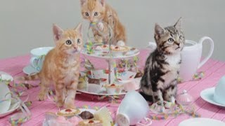 Cute cats! Homeless kittens enjoy tea party for animal charity