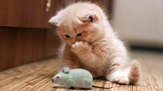 Funny Cats Fails Compilation Try Not To Laugh   Cute Cats And Kittens – Funny Compilation