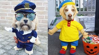 Funny Cutest Dog Costumes Compilation – Cute Dog Video