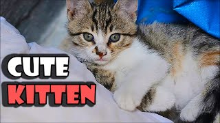 Four Baby Kittens Eating Food | Angry kitten | Cute Kittens 2