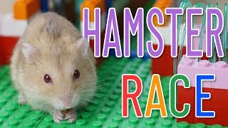 New Hamster Race From Lego Bricks For Two Cute Hamsters – Hamster Race | Magic Lego