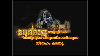 Madhuraraja villen dogs with their trainer ( what a obedient and cute dogs 😂😂😂)
