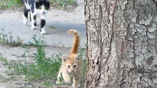 Father cat teaches the kitten to climb up a tree