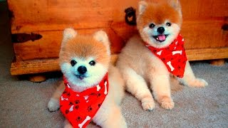 Cute Dogs & Puppies #57