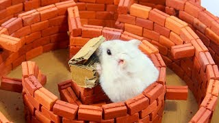 Our Pet Hamsters Running In Mini Brick Circle Maze #CuteHamster