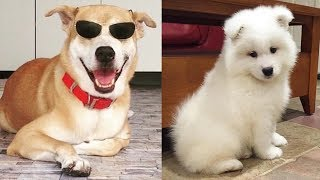 Cutest Puppies And Dogs In The World – Cute Dogs Doing Funny Things 2019 – Puppies TV