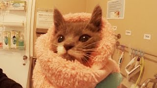 GoPro: 24-Hr Kitten Nursery