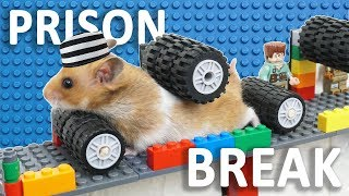 HAMSTER PRISON BREAK – Funny Hamsters Escaping Jail! | Magic Lego