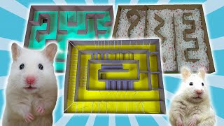 Amazing 3-level Big Maze for ACTIVE HAMSTERS 🐹 FUNNY Hamsters in Big Obstacle Course
