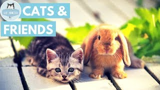 Cute Cats With Adorable Friends