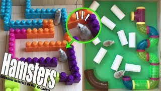 Hamsters Maze – Labyrinth Lego Obstacle Course  And Funny Hamsters | POP Pets  🐹