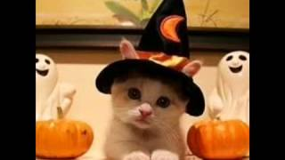 Cute cats in Costumes