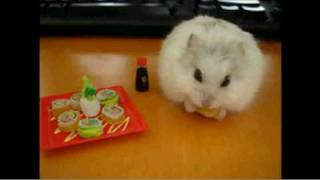 FUNNY HAMSTERS!!!!!!