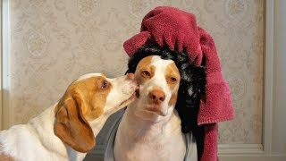 Kissing Dad: Cute Dogs Maymo & Penny #kissingdad