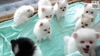 Cutes dogs _ Cutest dog in the world _ Cute dogs clips 2016 #2