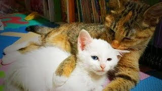 Cats and Kittens 😻  Funny Cats and Kittens Together (Full) [Funny Pets]
