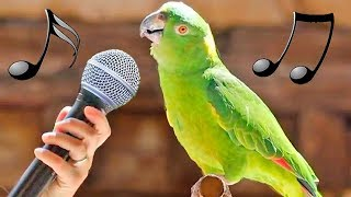 Funny Birds Imitate Dinosaur Machine Gun iPhone Cat Dog Alarm – Cute Parrots Dance Laugh Video