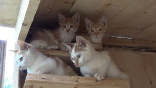Building a house for kittens and cats – DIY project