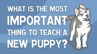 The MOST Important Thing To Teach A New Puppy – SOCIALISATION