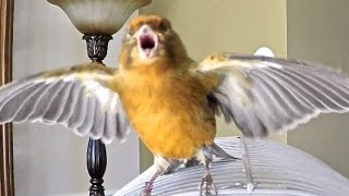 Best Funny Bird scary moments