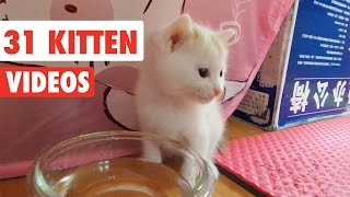 31 Funny Kittens   Cat Video Compilation 2017