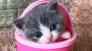 💗Aww – Funny and Cute Cats Compilation 💗 # 2- CuteVN 3
