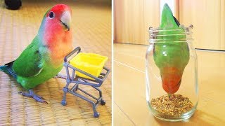 Cute Parrots Doing Funny Things #3 🦜 Funny Parrots and Cute Birds Compilation | Funny Cute Animals