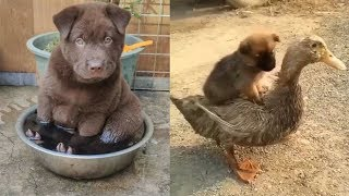 Funniest Puppy Moments – Cute Puppies Doing Funny Things 2019 | Baby Dogs Cute And Funny Compilation