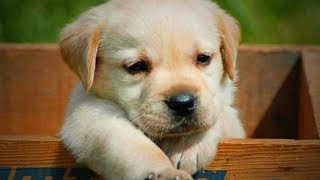 Funny Cute Puppies 😜🐶 Funny Dogs (Full) [Funny Pets]