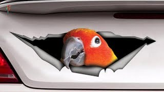 Funny Parrots and Cute Birds Compilation – Try Not To Laugh Challenge – Funny birds awesome videos