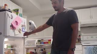 fridge magic almond butter🤣🤣🤣 funny birds