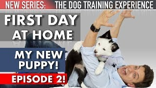 My New Puppy: The First Day Home! (NEW SERIES: The Dog Training Experience Episode 2)