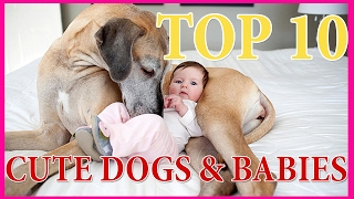 TOP 10 CUTE DOGS & BABIES