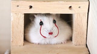Funny Hamsters Videos Compilation #5 | Cute and Funny moments of the animals – Cute TV