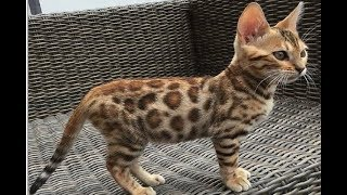 Cute And Funny Cat Compilation – A Cute Cat Meowing | Funny Dogs And Cats